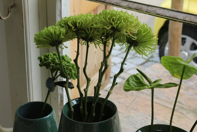 Blumen Bretten