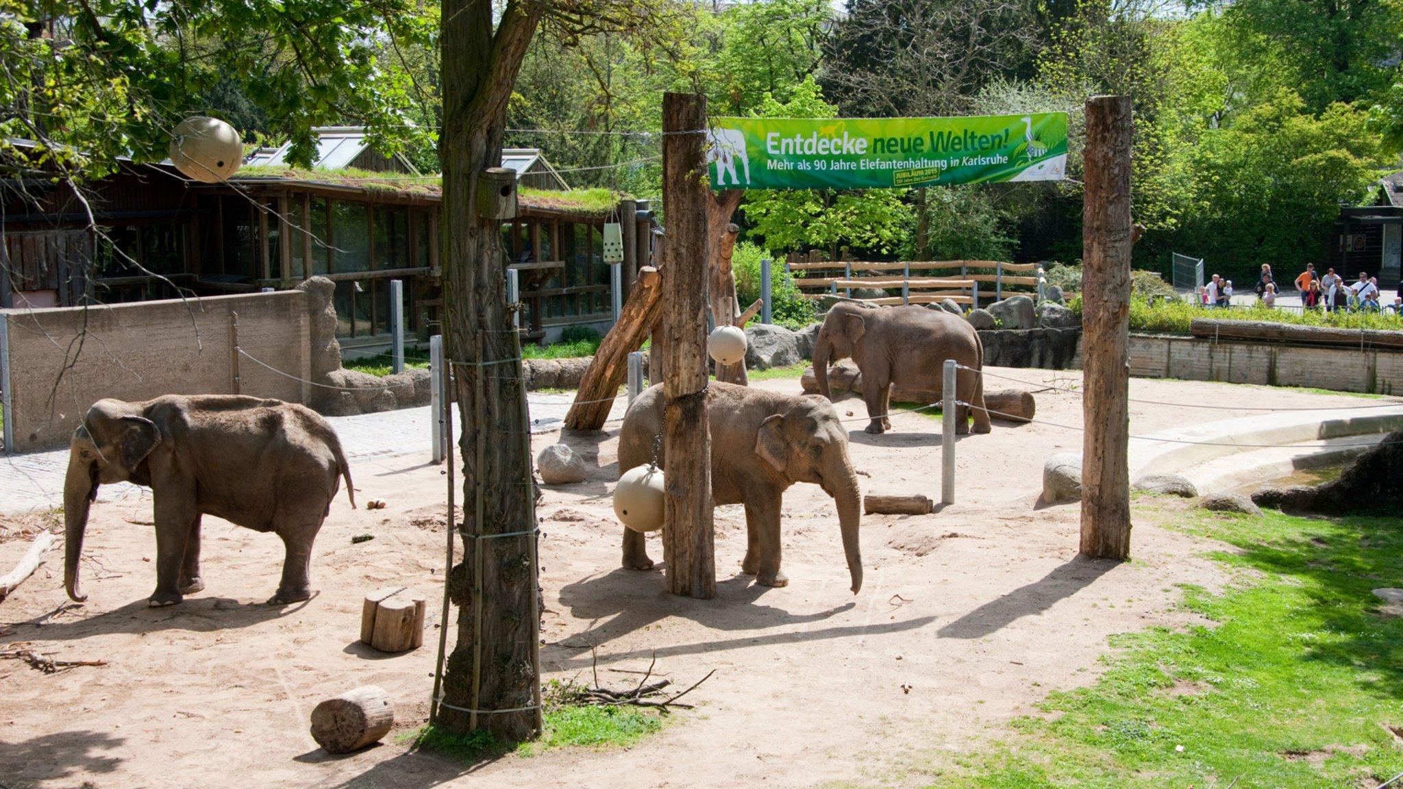 Zoo Karlsruhe Online-Shop