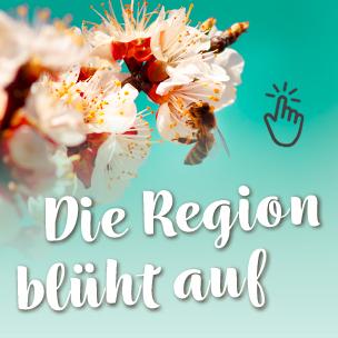 Region blüht auf